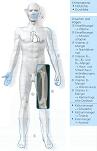 Dünndarmerkrankungen Symptome